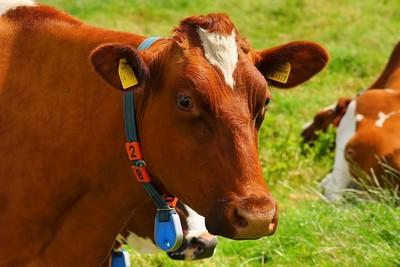 蘇格蘭出現狂牛症 10年來首例