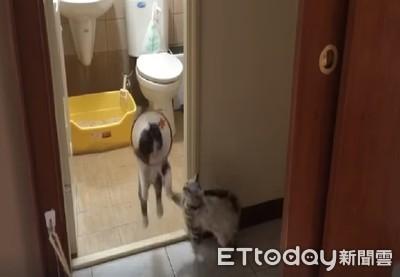 白目喵躲門外埋伏 貓弟嚇到彈起