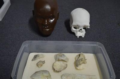 「露西亞」80%頭骨找到了!