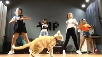 這才叫舞棍!練舞室少女等前奏 搶鏡喵皇先秀一輪地板動作