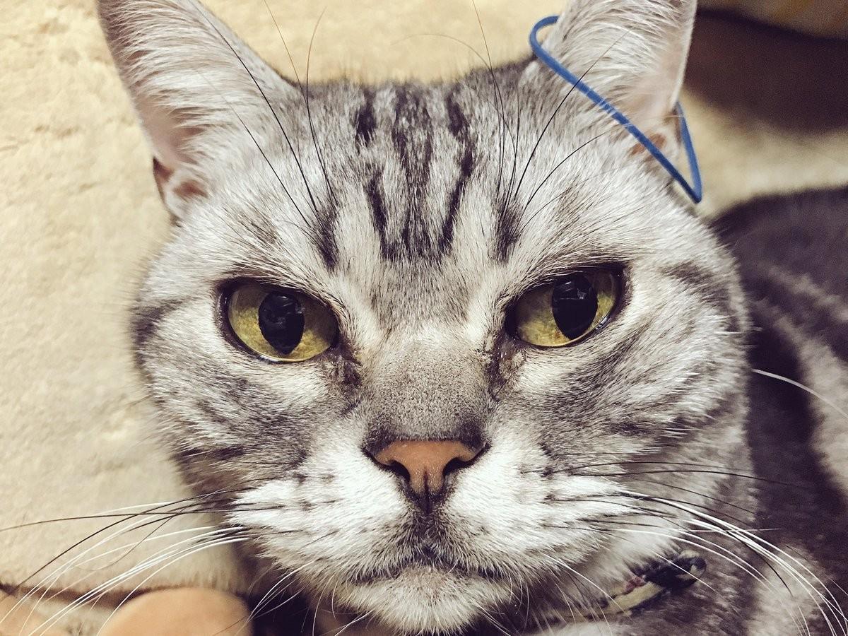 ▲▼被主人彈到橡皮筋,貓咪露出「眼神死透臉」。(圖/翻攝自推特,yakiudon99)
