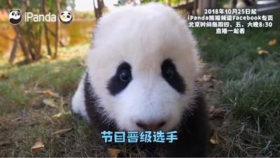 真人體驗《熊貓伴我行》25日首播