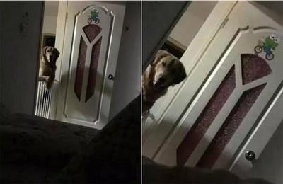 狗狗每晚盯睡覺 真相讓主人淚崩