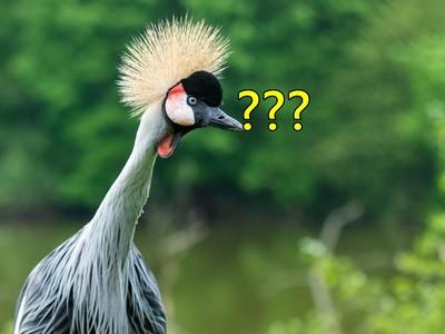 每年500萬隻鳥「被雲撞死」?洋蔥新聞:內藏冰晶=空中凶器