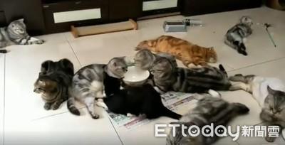 只有放空碗 就聚集這麼多貓咪
