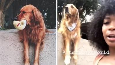 「叼球趴圍牆」拜託路人陪自己玩!這隻愛交朋友的狗,變成打卡景點
