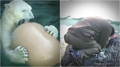 「抱歉,沒能照顧好你」韓北極熊退休前離世 訓獸師跪地痛哭不捨