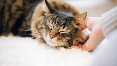 不忍牠受腫瘤折磨…媽溫柔擁抱臨終癌貓:寶貝坐好,我們回家了