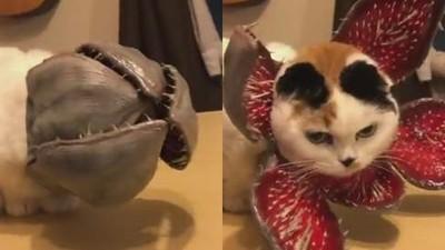 貓皇頭上種食人花!貓奴給主子做萬聖節妝扮 驚悚不輸鬼修女