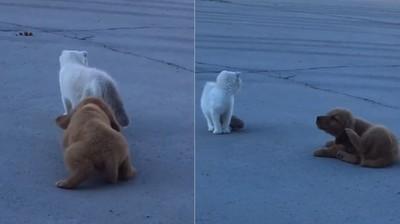 汪跟蹤貓 見牠轉頭「抬腳抓癢」