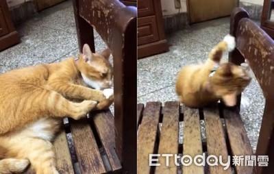 橘貓舔腳舔到跳鋼管「旋轉摔落」