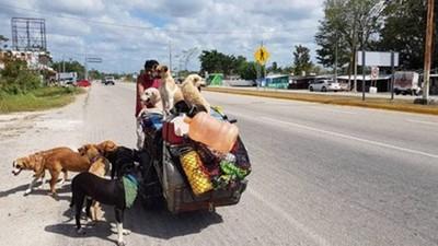 5年救400隻狗狗! 墨西哥大叔展開全國救援 大批浪浪變跟班