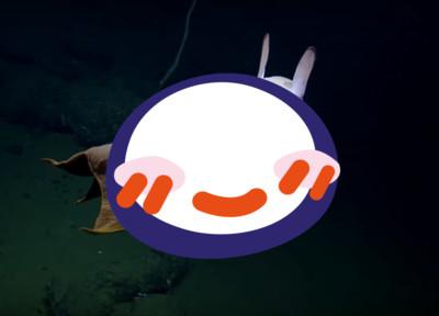 驚喜拍到小飛象章魚美得毛骨悚然