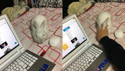 滑鼠觸感升級 網:求兔視線陰影