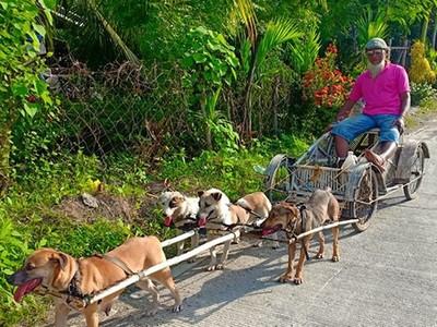 「九條愛犬綁上鞍繩」帶殘疾爺爺出門!愛狗魔人痛批:虐待動物