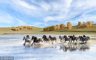 陸為全世界野馬最多國家 占四分之一