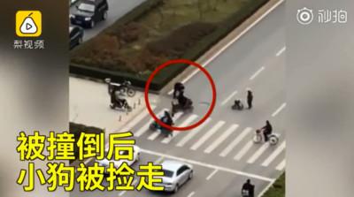 狗等紅綠燈過馬路 竟遭加速撞死