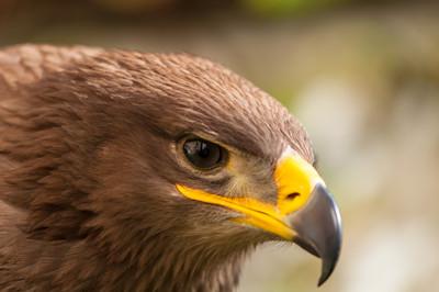 野鷹失蹤5個月 飛到伊朗收超貴帳單