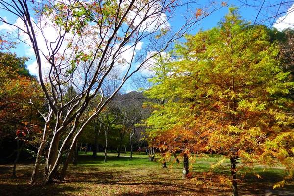 ▲奧萬大森林遊樂區。(圖/翻攝自奧萬大情報站粉絲專頁)