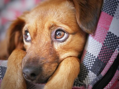 如果自覺「分辨不出好人與壞人」 根據京都研究,你比狗還不如!