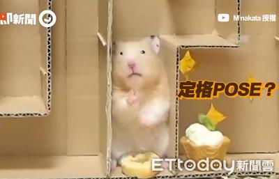 倉鼠「自開出口」破解零食迷宮!
