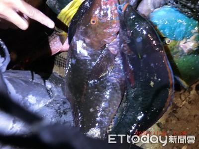 墾丁保育區捕抓鸚哥魚 兩男挨罰