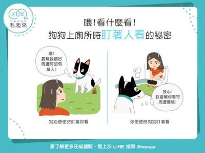 為啥狗狗喜歡盯主人上廁所?「2原因」公開...趕快賞牠肉肉