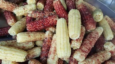 3支玉米去尾數俗俗賣!阿桑超嫌棄