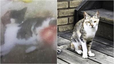 2月大幼貓遭利刃「剖皮外翻能見骨」 韓虐貓兇手:只是討厭牠們