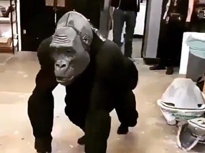 看了發毛!「AI猩猩機器人」似有空洞靈魂,恐怖谷效應讓人顫抖