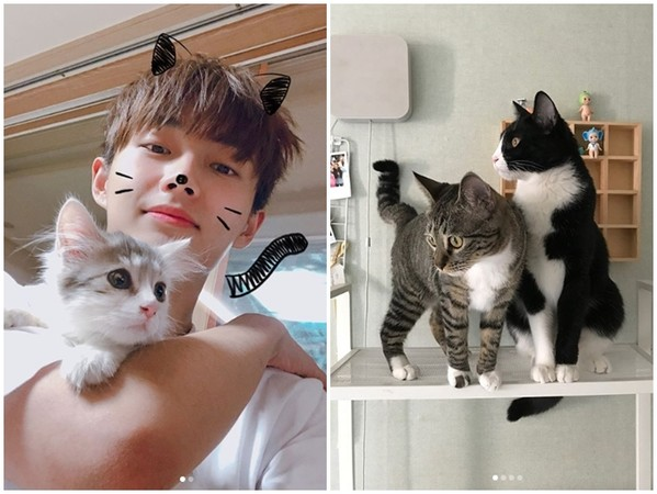 ▲JBJ金龍國爆棄養寵物。(圖/翻攝自金龍國Instagram)