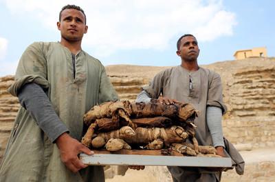 埃及出土罕見貓、聖甲蟲木乃伊