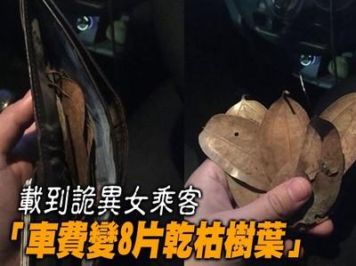 他載到詭異女乘客 車費變樹葉