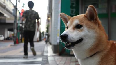 留遺產給毛小孩 日本「寵物信託」解老年擔憂 幫找新飼主養牠一輩子