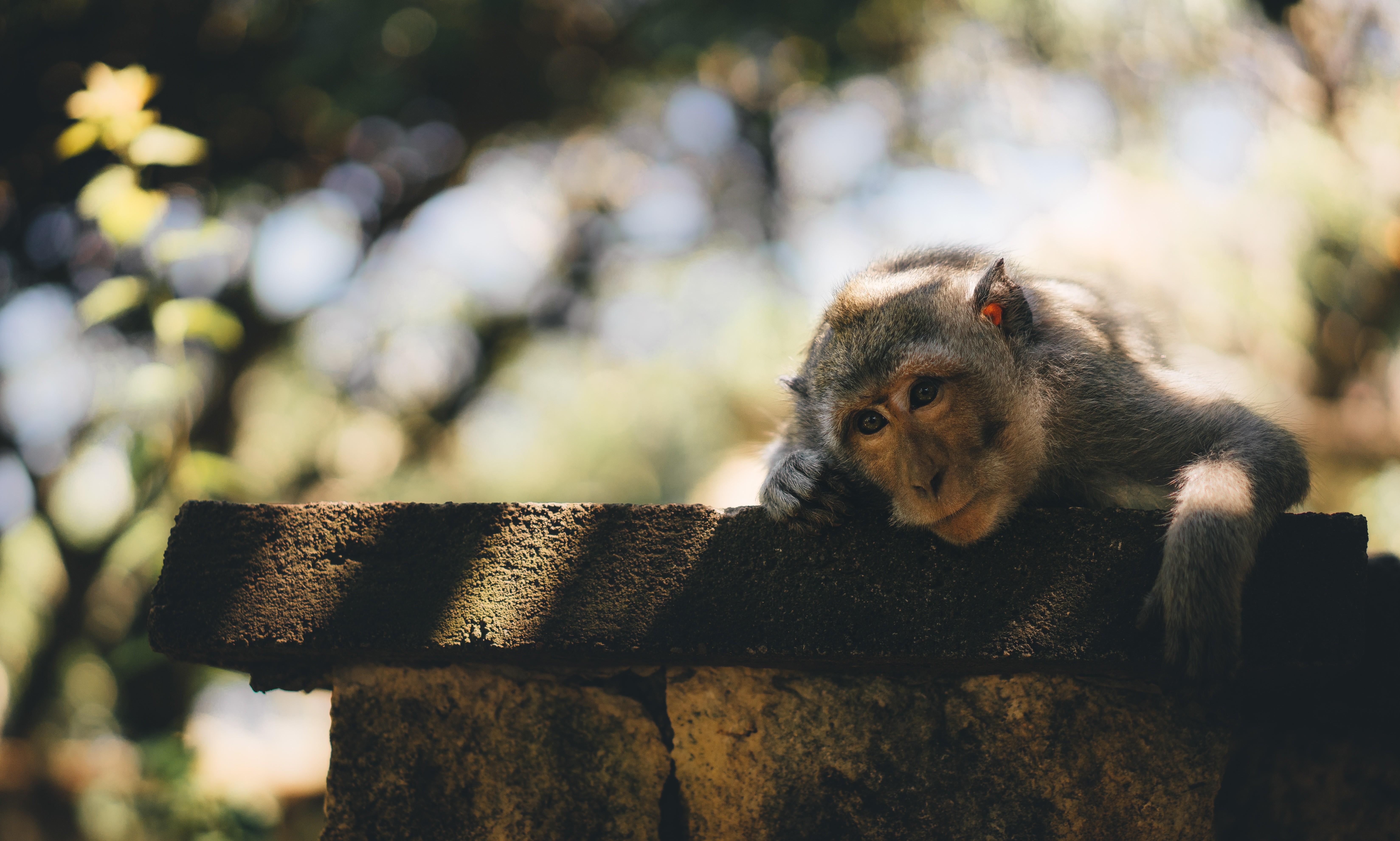▲▼猴子。(圖/取自免費圖庫librestock)