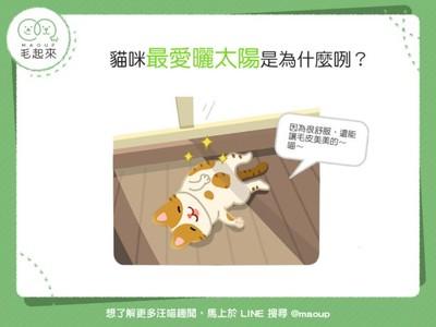為啥貓咪喜歡曬日光浴?3原因揭秘