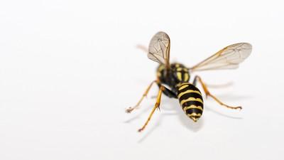 蜜蜂僅用4個腦細胞從1數到5!