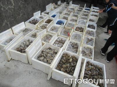 影/劣!追回戴奧辛大閘蟹疑遭「調包」 16噸早被民眾吃下肚