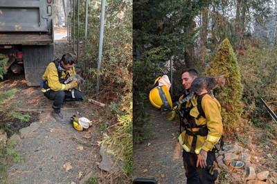 貓遇森林大火 爬消防員肩秒變朋友