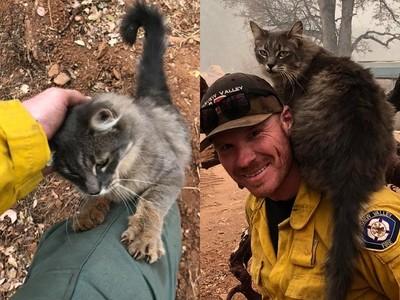 緊抓救命恩人不放!消防員勇闖森林大火救出野貓 牠黏緊緊求收編