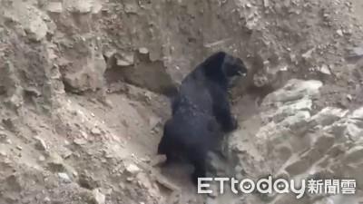 牠是1萬年前的在地住民:台灣黑熊