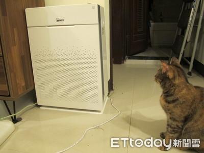 換毛季別崩潰!  將「電漿波抗菌」放進清淨機...貓狗再也不怕病