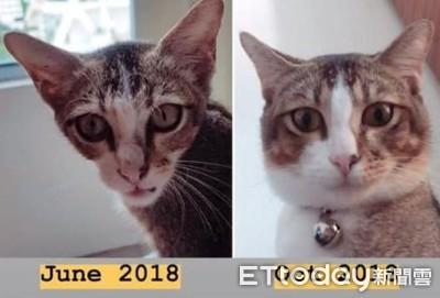 ET臉被收養 4個月「嘴邊肉溢出」變美貓