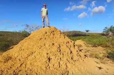 挖了3800年 白蟻蓋出巨大土丘群