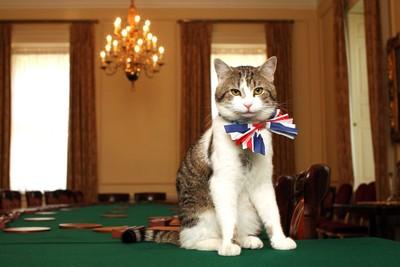 「英國第一貓」被困首相府外 坐等奴才開大門 駐警目睹默默幫敲敲