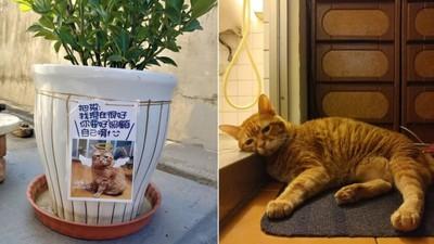 知道家人放不下牠...胖橘貓離世後「偷溜回家」:別覺得對不起我