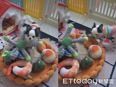 狗從娃娃池叼出一隻魚 媽媽嚇到