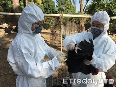 冬季禽流感好發 加強採檢監測