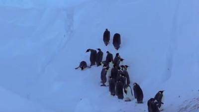企鵝寶寶凍死冰坑!BBC紀錄片陷人性掙扎 打破原則「干涉自然界」