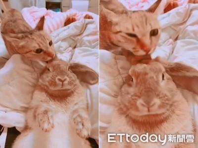 兔寶享受喵SPA 爽到愛心鼻狂抽